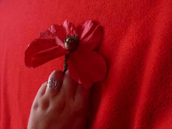 http://mademoisellerenarde.cowblog.fr/images/892463SDC11609-copie-1.jpg